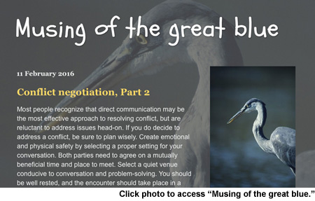 Musing of the great blue blog by Cindy Clark